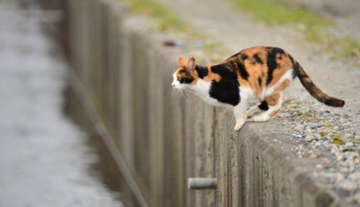 三毛猫JAPAN